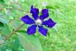 flower43