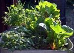 tub_garden