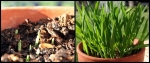 charkie_grass_combine