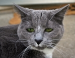 lily grumpy
